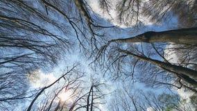 Κλάδοι δέντρων ενάντια στο μπλε ουρανό Άποψη από από κατω έως επάνω απόθεμα βίντεο