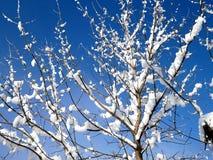 Κλάδοι δέντρων κάτω από την κάλυψη του χιονιού στοκ εικόνες