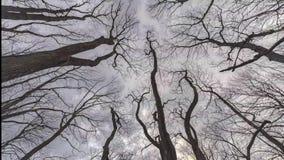 Κλάδοι δέντρων και νεφελώδης ουρανός που κοιτάζουν επάνω στο χρονικό σφάλμα απόθεμα βίντεο