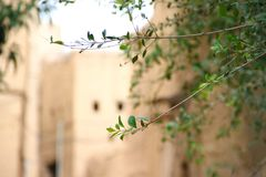 Κλάδοι δέντρων με τα αρχαία κτήρια λάσπης στην πλάτη στοκ εικόνα με δικαίωμα ελεύθερης χρήσης