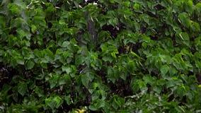 Κλάδοι δέντρων που κάμπτουν κάτω από τη βαριά θύελλα και τον αέρα στο άσχημο καιρό απόθεμα βίντεο