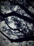 Κλάδοι δέντρων στο ηλιοβασίλεμα στοκ φωτογραφία με δικαίωμα ελεύθερης χρήσης