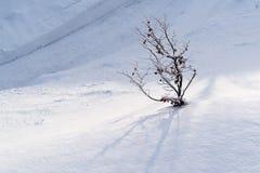 Κλάδοι δέντρων στο χιόνι την ηλιόλουστη ημέρα στοκ εικόνες