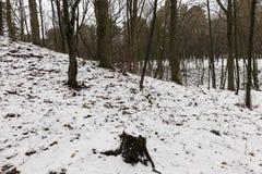 Κλάδοι δέντρων στο χιόνι στοκ εικόνες