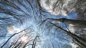 Κλάδοι δέντρων υποβάθρου ενάντια στο μπλε ουρανό Άποψη από από κατω έως επάνω απόθεμα βίντεο