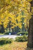 Κλάδοι ενός δέντρου με τα κίτρινα φύλλα, ο απόμερος πάγκος σε ένα πάρκο μια ηλιόλουστη ημέρα φθινοπώρου στοκ εικόνες