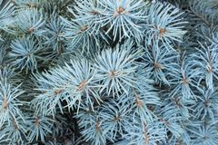Κλάδοι ενός χειμερινού δέντρου Στοκ Εικόνα