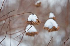 Κλάδοι κάτω από το χιόνι στο χειμερινό δασικό γραφικό τοπίο Στοκ εικόνες με δικαίωμα ελεύθερης χρήσης