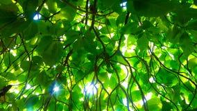 Κλάδοι και φύλλα δέντρων Στοκ Φωτογραφία