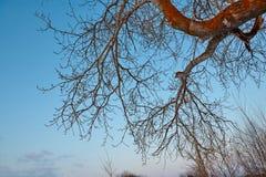 Κλάδοι λευκών στο υπόβαθρο μπλε ουρανού την άνοιξη Στοκ Εικόνα