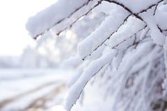 Κλάδοι μετά από χιονοπτώσεις στοκ εικόνα