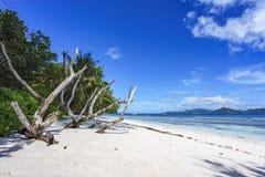 Κλάδοι στην άσπρη άμμο της παραλίας στο anse αυστηρό, Λα digue Στοκ Εικόνες
