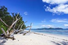 Κλάδοι στην άσπρη άμμο της παραλίας στο anse αυστηρό, Λα digue Στοκ Φωτογραφίες