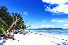 Κλάδοι στην άσπρη άμμο της παραλίας στο anse αυστηρό, Λα digue Στοκ εικόνες με δικαίωμα ελεύθερης χρήσης