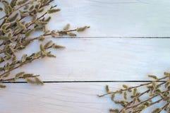 Κλάδοι στους παλαιούς ξύλινους πίνακες Τοπ όψη Ένα σύμβολο της αναγέννησης στοκ εικόνες