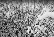 Κλάδοι στο υπόβαθρο χιονιού Στοκ φωτογραφίες με δικαίωμα ελεύθερης χρήσης