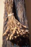 Κλάδοι της ξηράς άγριας παπαρούνας πεδίο βάθους ρηχό Κινηματογράφηση σε πρώτο πλάνο στοκ φωτογραφία με δικαίωμα ελεύθερης χρήσης