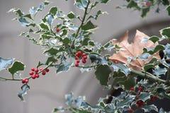 Κλάδοι της Holly με τα κόκκινα φρούτα στοκ εικόνα