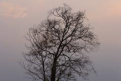 Κλάδοι του νεκρού δέντρου Στοκ Φωτογραφία