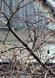 Κλάδοι των δέντρων της Apple χωρίς φύλλα με τις πτώσεις νερού Στοκ φωτογραφία με δικαίωμα ελεύθερης χρήσης