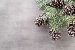 Κλάδοι Χριστουγέννων χαιρετισμός Χριστουγέννων καρτών Χριστούγεννα συμβόλων Στοκ φωτογραφία με δικαίωμα ελεύθερης χρήσης