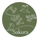 Κλάδοι Sakura και ιαπωνικά πουλιά Φύση της Ιαπωνίας ελεύθερη απεικόνιση δικαιώματος