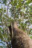 Κλάδοι trees.2 Στοκ εικόνα με δικαίωμα ελεύθερης χρήσης