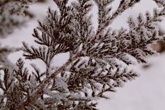 Κλάδος Ð  ενός ιουνιπέρου, ένα χειμερινό παραμύθι, παγετός Στοκ εικόνες με δικαίωμα ελεύθερης χρήσης
