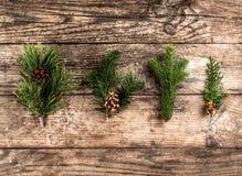Κλάδος έλατου Χριστουγέννων, ερυθρελάτες, ιουνίπερος, έλατο, αγριόπευκο, κώνοι πεύκων στο ξύλινο υπόβαθρο στοκ εικόνα με δικαίωμα ελεύθερης χρήσης