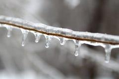 Κλάδος δέντρων που καλύπτεται με τον πάγο στοκ φωτογραφία