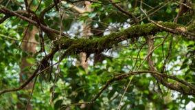 Κλάδος δέντρων που καλύπτεται στο πράσινο βρύο στο δάσος στοκ εικόνα