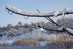 Κλάδος δέντρων που καλύπτονται με το χιόνι, και χειμερινό τοπίο Στοκ Εικόνες