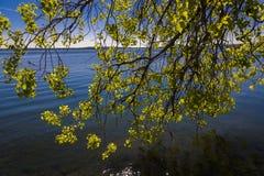 Κλάδος δέντρων στην ακτή της λίμνης Monona, Μάντισον, Ουισκόνσιν στοκ φωτογραφία με δικαίωμα ελεύθερης χρήσης