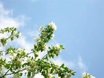 Κλάδος δέντρων της Apple ενάντια στον ουρανό Στοκ φωτογραφία με δικαίωμα ελεύθερης χρήσης