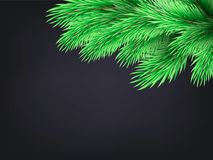 Κλάδος δέντρων του FIR στο σκοτεινό υπόβαθρο Στοκ Εικόνες