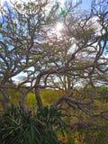 Κλάδος δέντρων ως τοπίο για τα υπόβαθρα Στοκ Εικόνες