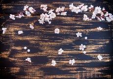 Κλάδος ενός ανθίζοντας βερίκοκου με τα άσπρα λουλούδια Στοκ Εικόνες