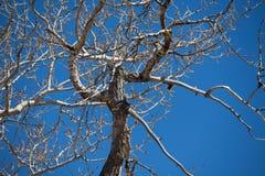 Κλάδος ενός δέντρου στοκ εικόνα με δικαίωμα ελεύθερης χρήσης