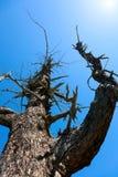 Κλάδος ενός δέντρου στοκ εικόνες