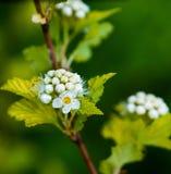 Κλάδος με τα λουλούδια Στοκ φωτογραφία με δικαίωμα ελεύθερης χρήσης