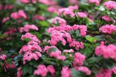 κλάδος με τα όμορφα λουλούδια Στοκ εικόνα με δικαίωμα ελεύθερης χρήσης