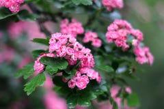 κλάδος με τα όμορφα λουλούδια Στοκ Φωτογραφίες