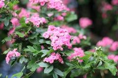 κλάδος με τα όμορφα λουλούδια Στοκ φωτογραφία με δικαίωμα ελεύθερης χρήσης