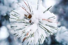 Κλάδος πεύκων υπό μορφή snowflakes που καλύπτονται με το χιόνι Στοκ φωτογραφίες με δικαίωμα ελεύθερης χρήσης