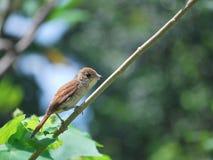 κλάδος πουλιών σκαρφαλ& στοκ εικόνα με δικαίωμα ελεύθερης χρήσης