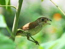κλάδος πουλιών στοκ εικόνες με δικαίωμα ελεύθερης χρήσης