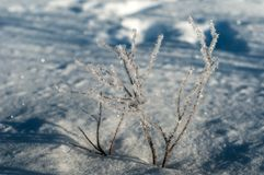 Κλάδος στον παγετό σε έναν τομέα που καλύπτεται με το φρέσκο άσπρο χιόνι σε ένα ηλιόλουστο χειμερινό πρωί Στοκ εικόνα με δικαίωμα ελεύθερης χρήσης