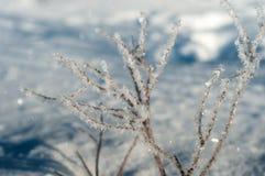 Κλάδος στον παγετό σε έναν τομέα που καλύπτεται με το φρέσκο άσπρο χιόνι σε ένα ηλιόλουστο χειμερινό πρωί Στοκ Φωτογραφία