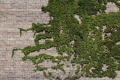 Κλάδος στο τουβλότοιχο Στοκ εικόνες με δικαίωμα ελεύθερης χρήσης