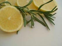 Κλάδος της Rosemary με το λεμόνι στοκ εικόνες με δικαίωμα ελεύθερης χρήσης
